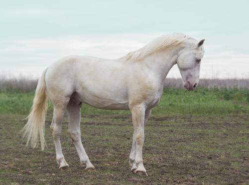 Healthy horse diet