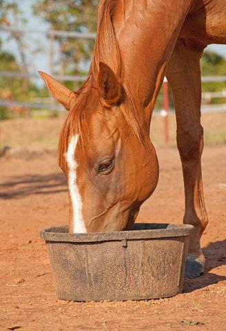 alfalfa pellets for horses