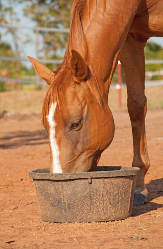 alfalfa pellets for horses