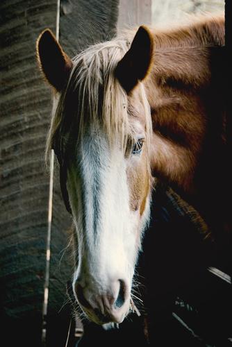 horse food wholesalers