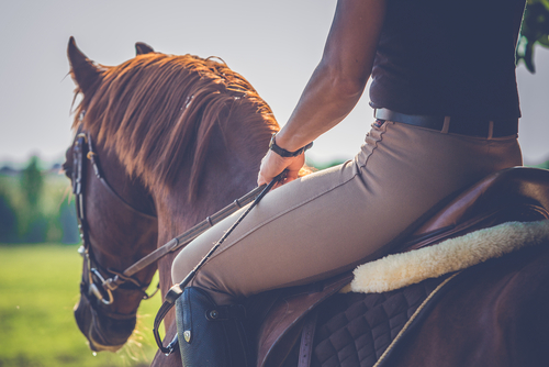 feed for horse riding