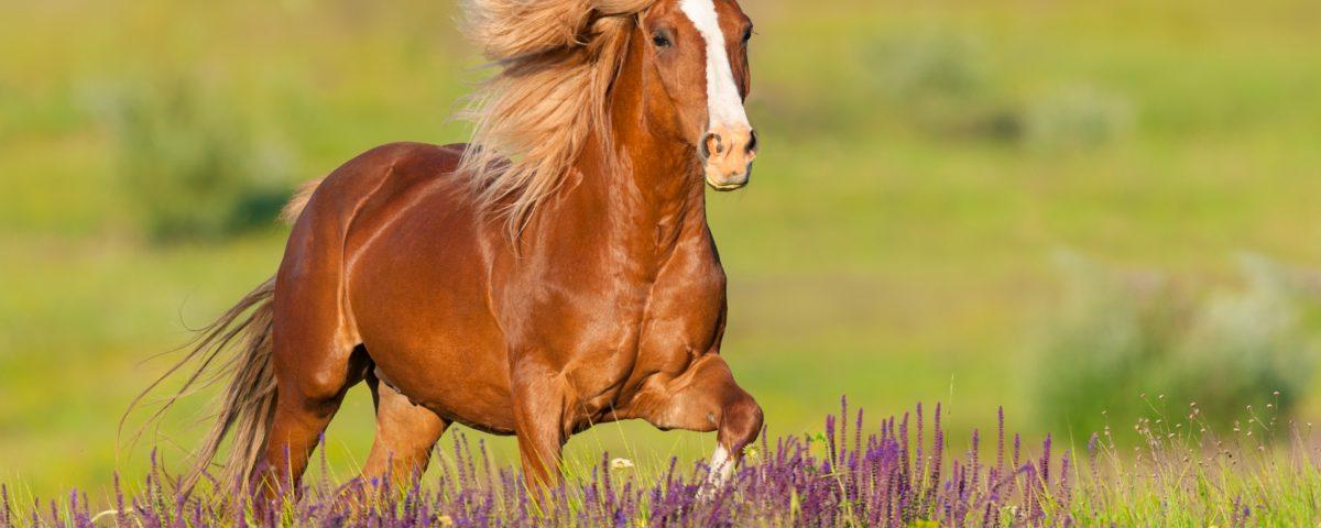 summer horse care